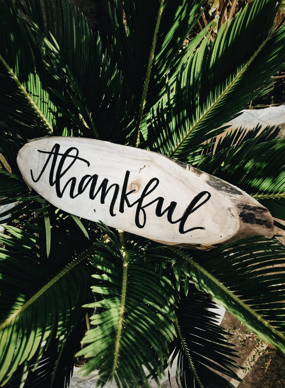 More Balanced Living - thankful written on wood in palm tree